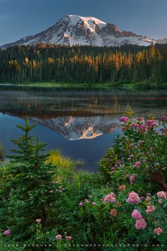 ~~Reflection Lake, Mt. Rainier ~ peaceful sunrise, Washington by Sean Bagshaw~~