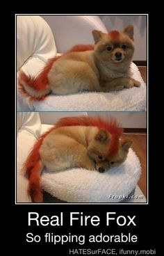 Firefox I want one!!