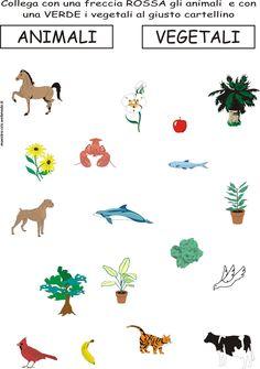SCHEDA ANIMALI VEGETALI.jpg