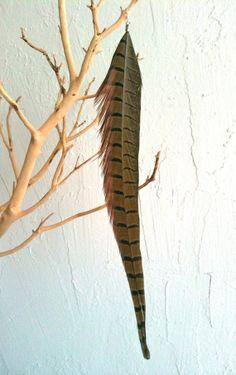 Extra Long Pheasant Feather  Single Earring  Style by jessamurph, $16.00