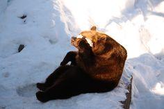 #bears #ahtarizoo