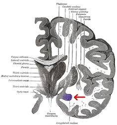 How your Stored Memories in the Amygdala can lead to PTSD. | elephant journal http://www.elephantjournal.com/2016/07/recognizing-ptsd-befriending-your-amygdala/