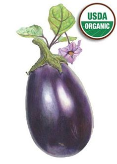 Eggplant Black Beauty :love these illustrations for Botanical Interests Seeds