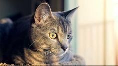 Declawing you're cat Denver ban