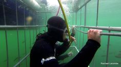 Shark Cage Diving Shark Cage Diving is one of the main reasons that people come to Cape Town. And shark cage diving is what we offer! Book with us in False Bay or we can book you on a Gansbaai Trip. Great White Shark Diving, Shark Cage, Animal Kingdom, Riding Helmets, Cape Town, African, Trips, Fish, Dreams