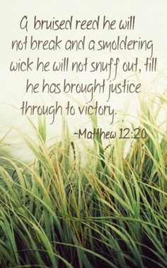 Matt 12 20 quot a bruised reed he will not break and a smoldering wick