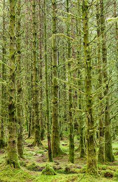 Lichen forest - Etive forest, Scotland, United Kingdom by Bart Heirweg