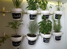plantas aromáticas en casa / aromatic plants