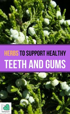Herbs For Teeth & Gums