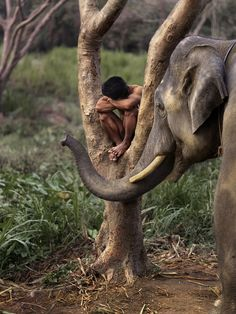 A man rests in a tree with his elephant in Chiang Mai, Thailand.