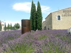 Lavender Museum near Avignon France, excellent site for lavender lovers