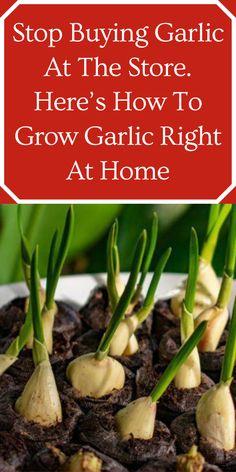 Garden Ideas Budget Backyard, Garden Ideas To Make, Diy Garden Projects, Diy Garden Decor, Growing Herbs, Growing Vegetables, Growing Flowers, Fruits And Vegetables, Vegetable Garden Design