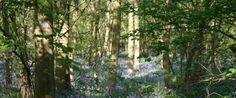 Waresley and Gransden Woods -