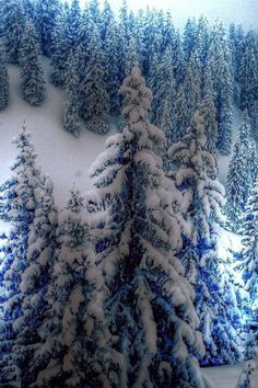 Spruce Cold Winter