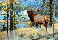 """""""Late To The Dance"""" by Cynthie Fisher ~ North American Big Game elk"""
