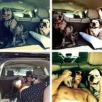 Michael Phelps LOVES His Dogs!