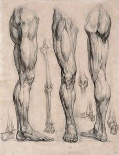 Exceptional Drawing The Human Figure Ideas. Staggering Drawing The Human Figure Ideas. Drawing Legs, Body Drawing, Life Drawing, Drawing Faces, Drawing Art, Drawing Muscles, Male Figure Drawing, Figure Drawings, Drawing Studies