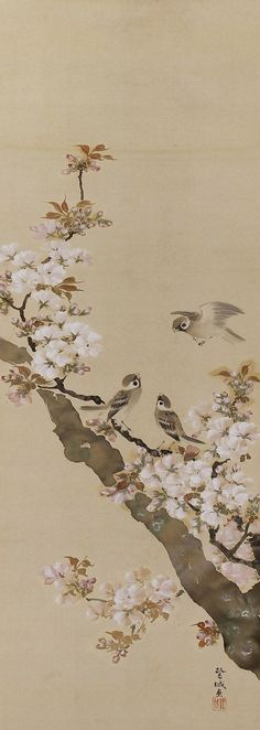 Sparrows in Cherry Blossom, Ito Rojo (-1948), Japanese scroll painting.: