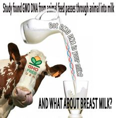 Breast milk and #Gmo milk