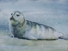 Watercolor on Panel Wildlife Paintings, Nautical Art, Whale, Boat, Birds, Watercolor, Animals, Animales, Whales