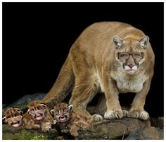 Mothers protect their cubs.