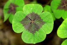 Resultado de imagen para trebol de cuatro hojas