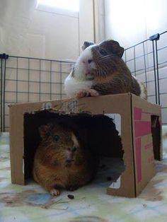 chubby piggies!