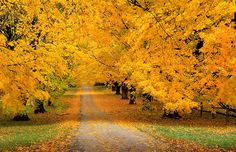"""""""Autumn carries more gold in its pocket than all the other seasons.""""  ― Jim Bishop"""