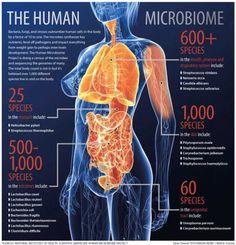 Lo sapevi che quella che può essere considerata l'identità biologica umana è composta da circa 40mila miliardi di microbi ??