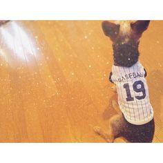 #0827 . 新しい服だよ〜💓 野球BOY🐶⚾️ . #fashion#ファッション#服#犬#愛犬#dog#野球#baseball