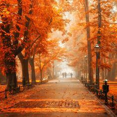 Orange leaves on lovely trees.
