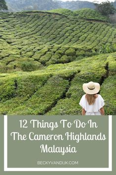 12 Things To Do In The Cameron Highlands, Malaysia - Becky van Dijk Malaysia Itinerary, Malaysia Travel Guide, Malaysia Trip, George Town, Borneo, Kuala Lumpur, Beautiful Places To Visit, Cool Places To Visit, Wonderful Places