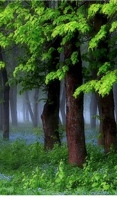 Mysterious Forest by Regina (Lithuania)
