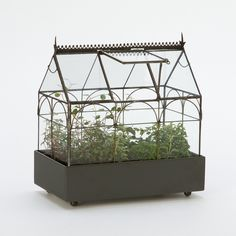 Edwardian Case Terrarium ($90) ❤ liked on Polyvore featuring home, home decor, black, plants, handmade home decor e black home decor
