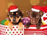 Carte de Noël virtuelle Les animaux fêtent Noël
