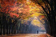 Fotografía Morning por Tiger Seo en 500px Incheon Gran Park, Incheon, Corea