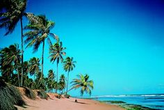 pictures of beaches in brazil | Brazil Beaches Tour | 4* & 5* Vacation Bahia, Maceio, Recife, Olinda