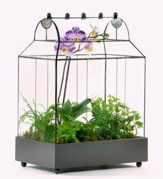 H Potter Plant Terrarium H Potter,http://www.amazon.com/dp/B00ENKGTMQ/ref=cm_sw_r_pi_dp_pIBSsb05RP9X5843