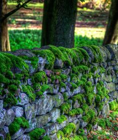 Stonewalled in Yorkshire - Modern Design Dry Stone, Brick And Stone, Stone Walls, Stone Fence, Stone Walkway, Moss Garden, Garden Stones, Fence Landscaping, Landscaping With Rocks
