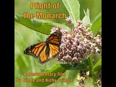 Here's How You Can Help Bring Monarch Butterflies (and Honey Bees) Back from the Brink of Extinction