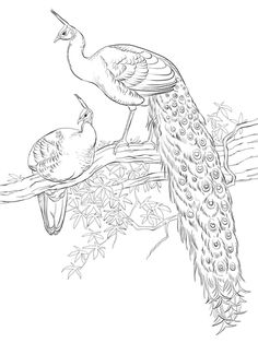 Green Java Peacocks coloring page from Peacocks category. Select from 24104 printable crafts of cartoons, nature, animals, Bible and many more. Peacock Coloring Pages, Bird Coloring Pages, Free Printable Coloring Pages, Adult Coloring Pages, Coloring Books, Watercolor Peacock, Peacock Drawing, Peacock Painting, Peacock Art