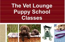 Here at The Vet Lounge we run puppy schools at the Coomera and Ormeau. They run for 4 weeks. Puppy Training School, Puppy School, Training Your Puppy, Veterinary Services, We Run, How To Train Your, Dog Bed, Schools, Lounge