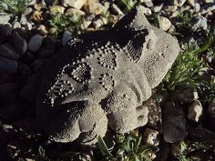 Toad Frog Stone Statuary by MountainArtCasting on Etsy
