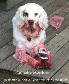 """Don't think he's been treated with  any """"Scotch Guard"""" stain resistant . . ."""