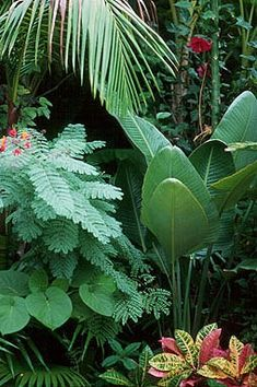 Looking for a popular Common Tropical Houseplants to grow in your house? Our guide will help you to choose the plants that attractiveness to your home. Patio Tropical, Tropical Garden Design, Tropical Landscaping, Backyard Landscaping, Tropical Style, Big Garden, Dream Garden, Lush Garden, Tropical Flowers