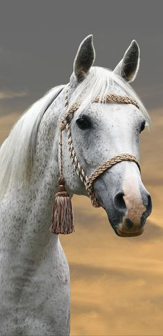 Not freckled white, but with undertones of gray. What a beauty. Most Beautiful Horses, All The Pretty Horses, Animals Beautiful, Animals And Pets, Cute Animals, Majestic Horse, Friesian, White Horses, Equine Photography