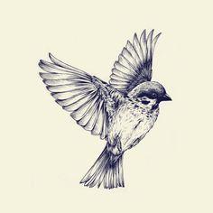 bird in flight line drawing - Google Search
