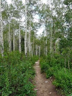The Freelance Adventurer : 3 Great Hikes in Steamboat Springs, Colorado