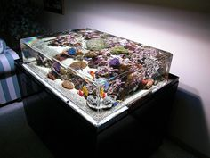 shallow, touch tank looking idea allowing top view