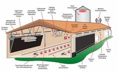 Get Smart Solutions: Why Start A Poultry Farm Business In Nigeria